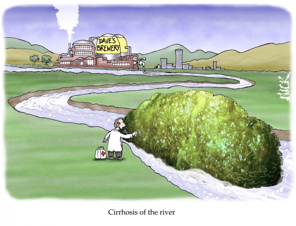 Cirrhosis of the river