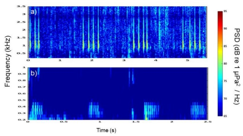 Spectograph of two spot and John Dory vocalisations
