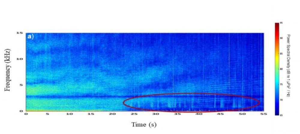 Spectogram of oat noise masking tow spot clicks